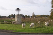 Sheep grazing around the Wortham Village Sign