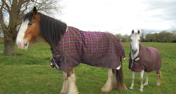 Ted the Clydesdale visits Wortham for the weekend for summer with his friend